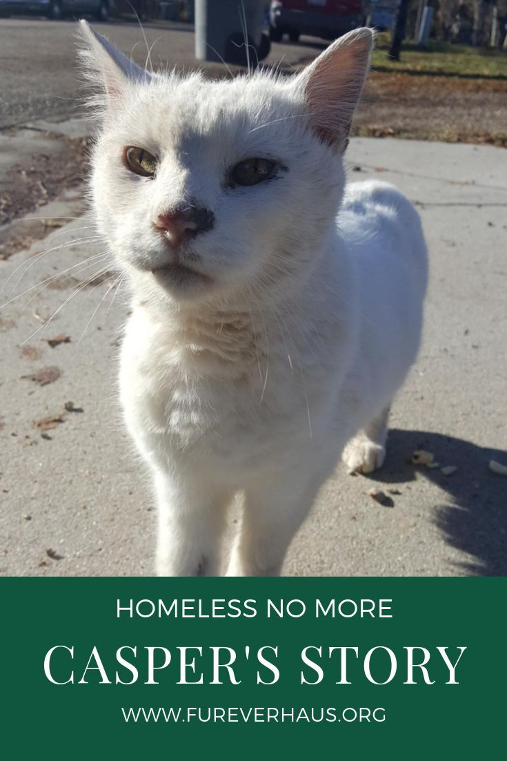 From The Streets To Furever Haus Casper S Story About Being Homeless To Rescue And His Amazing Transformation Cat Cute Cats And Kittens Cats Cat Adoption