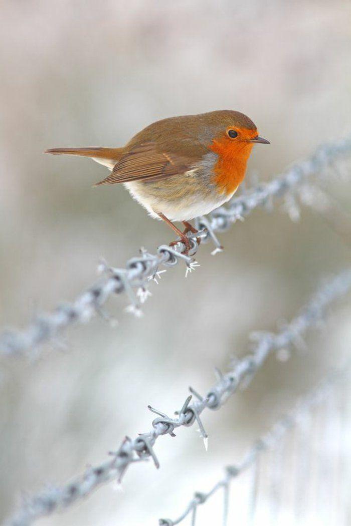 Le paysage d'hiver en 80 images magnifiques! - Archzine.fr #decembrefondecran