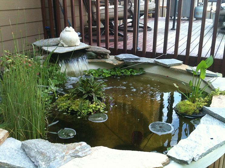We Have A Hot Tub Turned Into A Pond Great Addition To My
