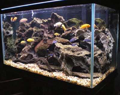 How to set up and aquascape a cichlid habitat fish for African cichlid rock decoration