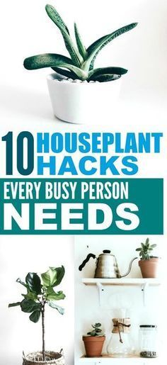 Great Houseplants Decor Ideas These 10 housplants tips are THE BEST Im so happy I found these GREAT houseplants decor ideas Now I have a great way to take care of my hous...