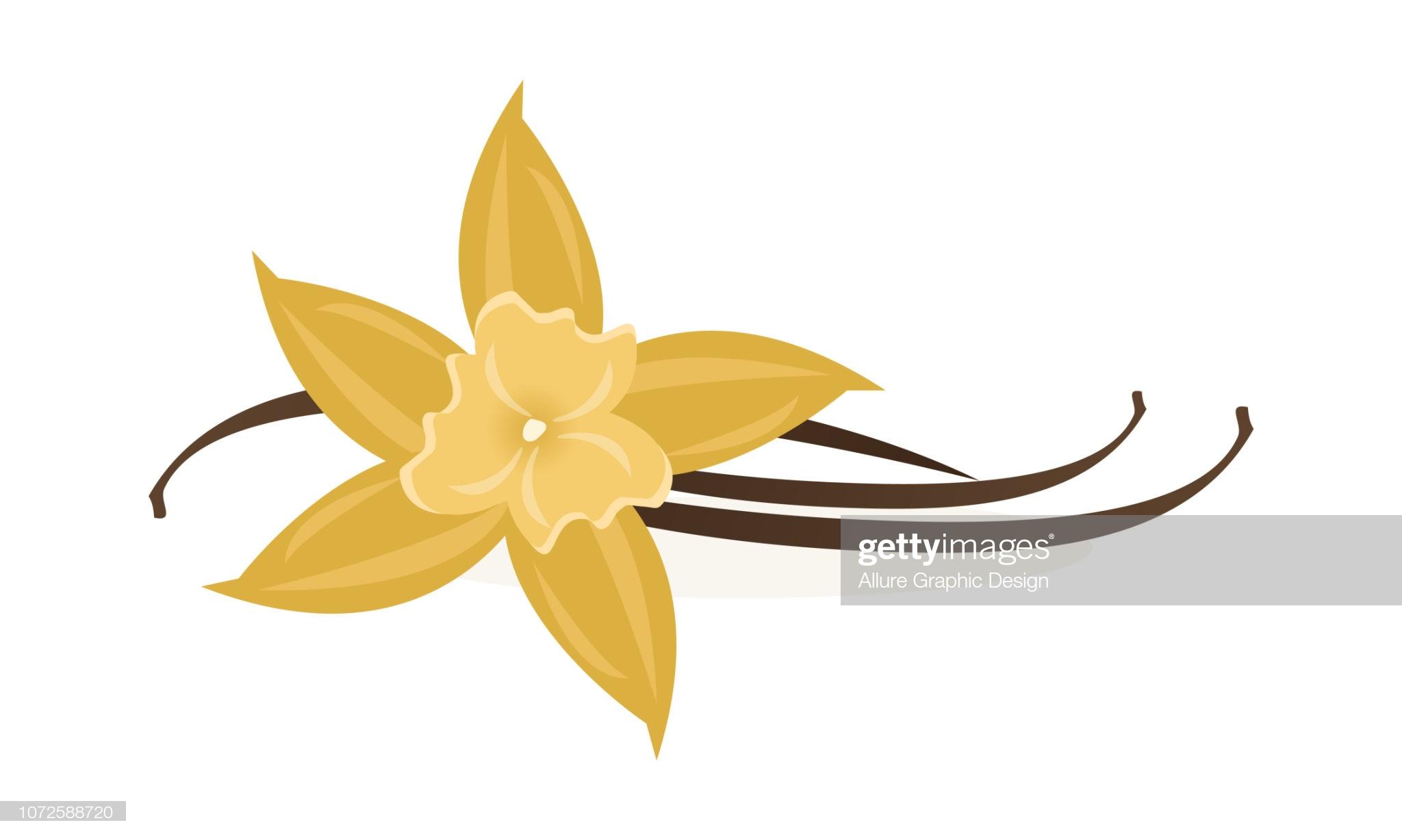 Vanilla Flower Leaves With Pod Stems In 2021 Flower Illustration Flowers Free Illustrations