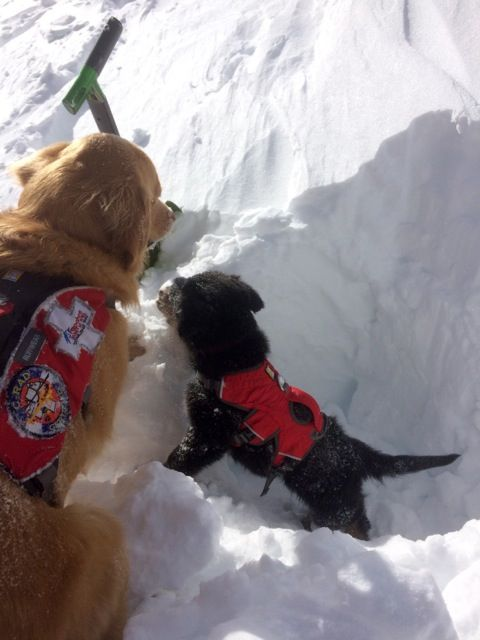 Sasha A New Puppy And Avy Dog In Training At Arapahoe Basin In