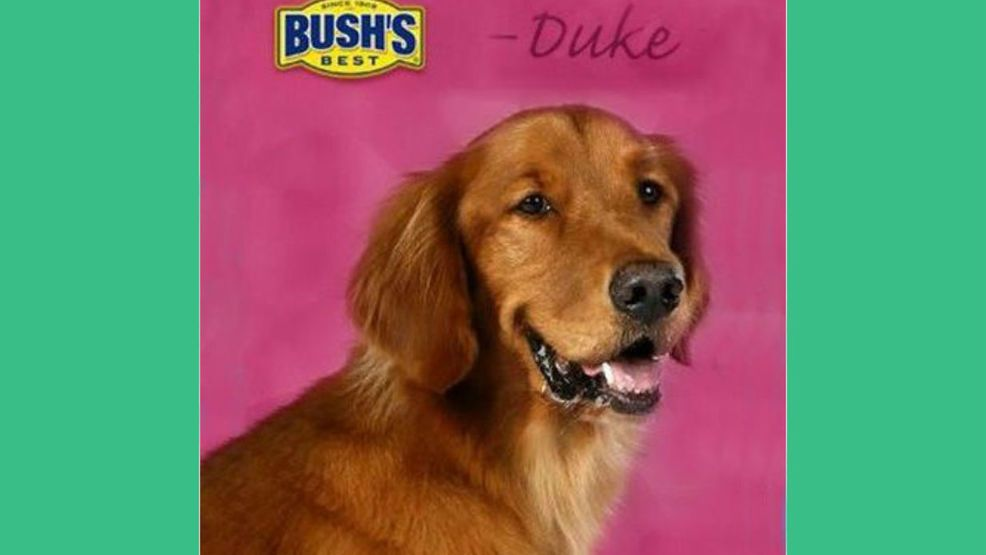 Duke The Bush S Baked Beans Dog Has Died With Images Golden