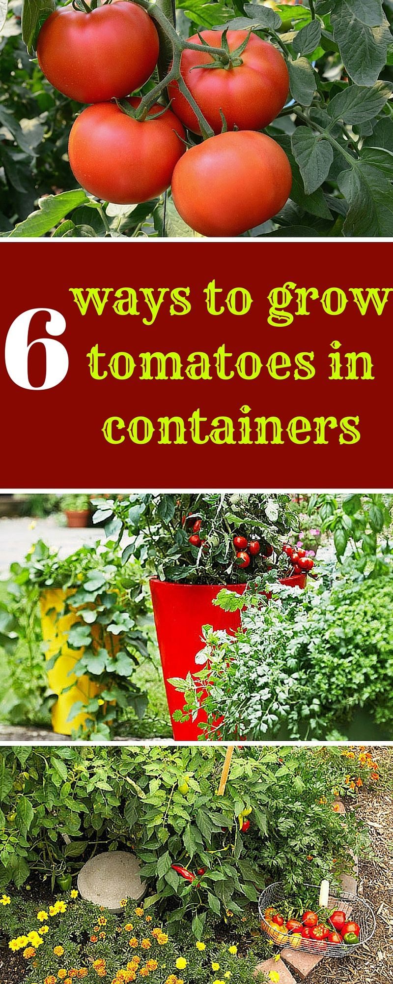 6 Ways To Grow Tomatoes In Containers Growing Vegetables 640 x 480