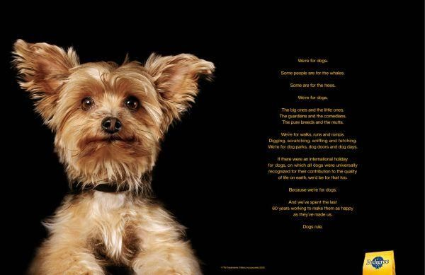 The Print Ad titled YORKIE was done for product: Pedigree ...