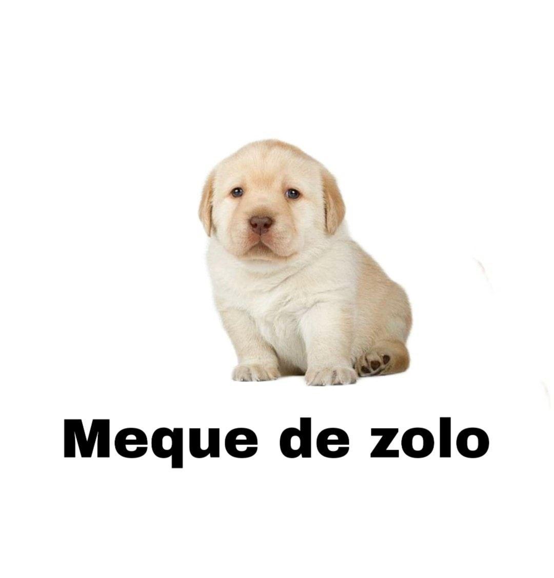 Pin De Lin Toffuo En Expresion Memes Divertidos Memes De Perros Chistosos Memes Perros