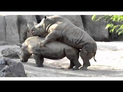 Animals Mating Funny Animals Videos Wild Animals HD