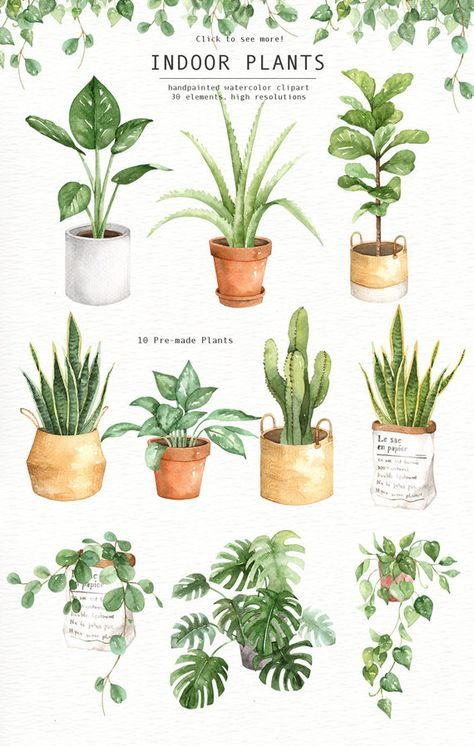 Indoor Plants Watercolor clipart, Watercolour Leaves, Watercolor flower, Leaf clipart, Wedding Clip Art, wedding invitation, wreath, green, is part of Watercolor plants - The set of high quality hand painted watercolor indoor plants and plant pots images  A fiddle leaf fig, snake plant, cactus and other animal illustrations are included in this set  Included 10 beautiful premade indoor plants with pots  Perfect for wedding invitations, greeting cards, quotes,
