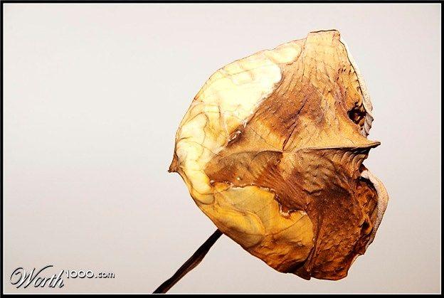 One Leaf 2012 - Worth1000 Contests