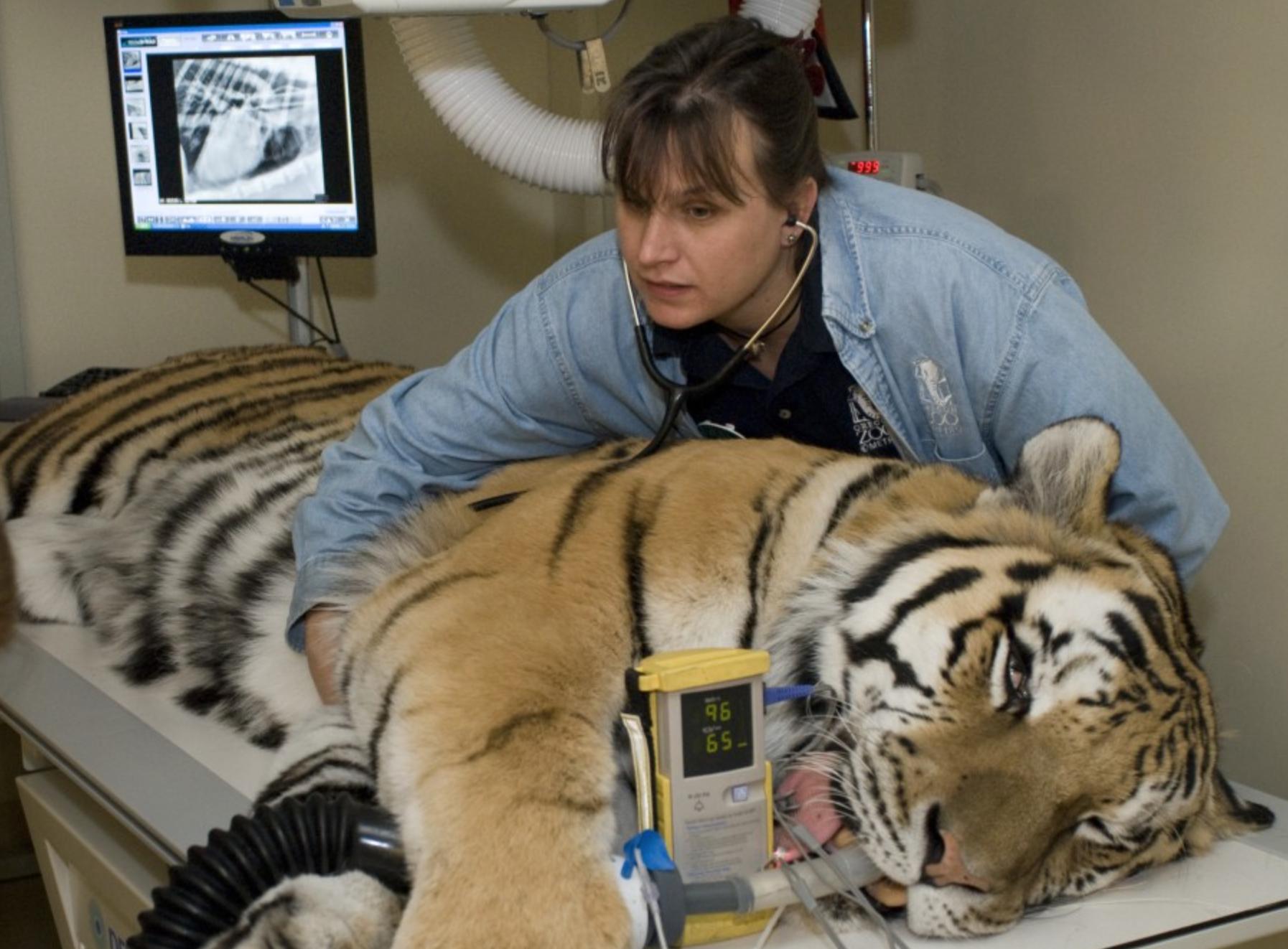 Veterinary Technician Overlooked & Misunderstood Zoo