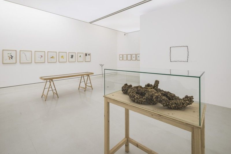 Lois Weinberger At Kunsthalle Mainz Contemporary Art Daily Contemporary Art Daily Exhibition Design Home Decor