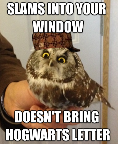 Scumbag Owl With Images Funny Owl Memes Owl Meme