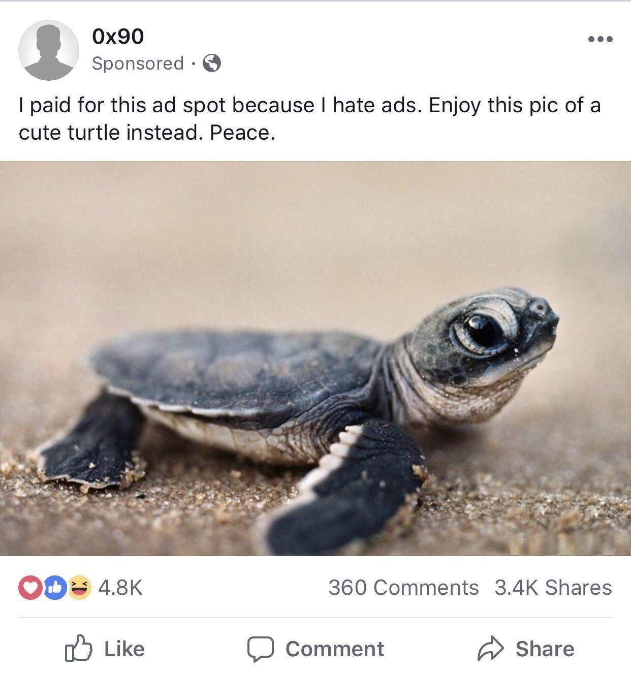 Good Facebookhttps I Redd It Bs3lmqzrhjq21 Jpg Cute Turtles Animal Memes Wholesome Memes