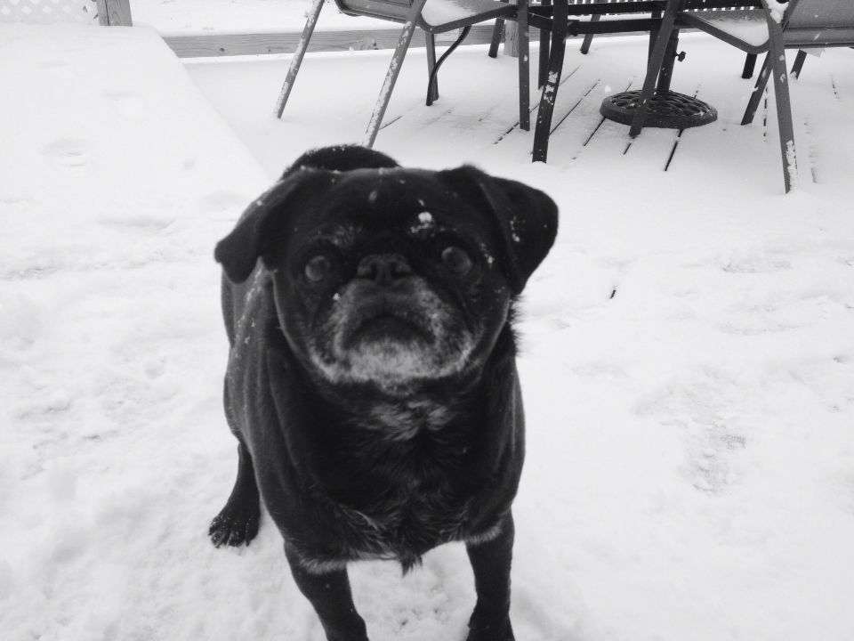 my dog absolutely loves the snow