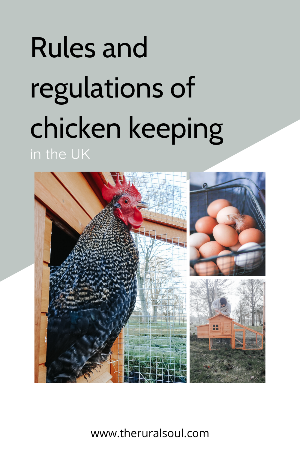 Keeping chickens Rules & regulations UK in 2020 Keeping