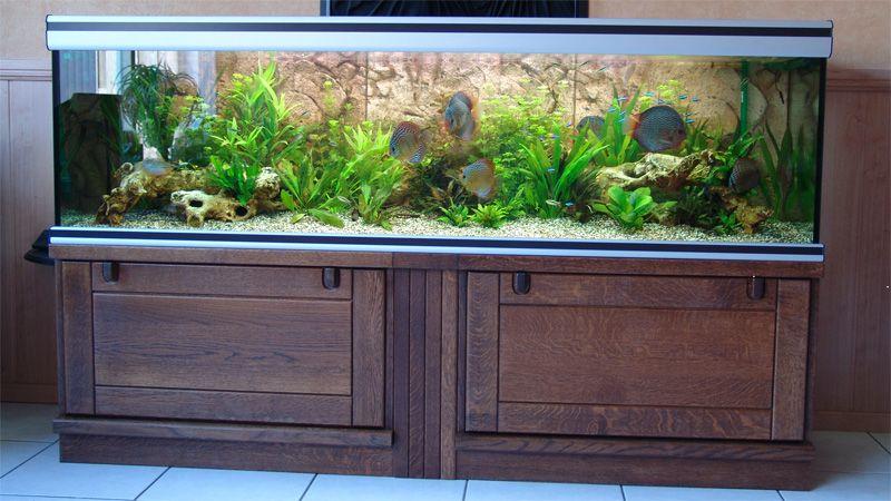 Betekenis aquarium  Een glazen bak waarin bijv  vissen kunnen zwemmen    woordenschat