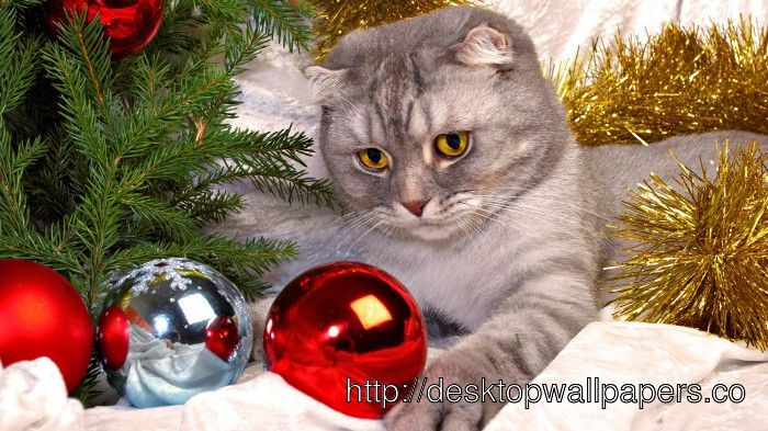 Cute And Lovely Christmas Cat HD Wallpaper Photos 13
