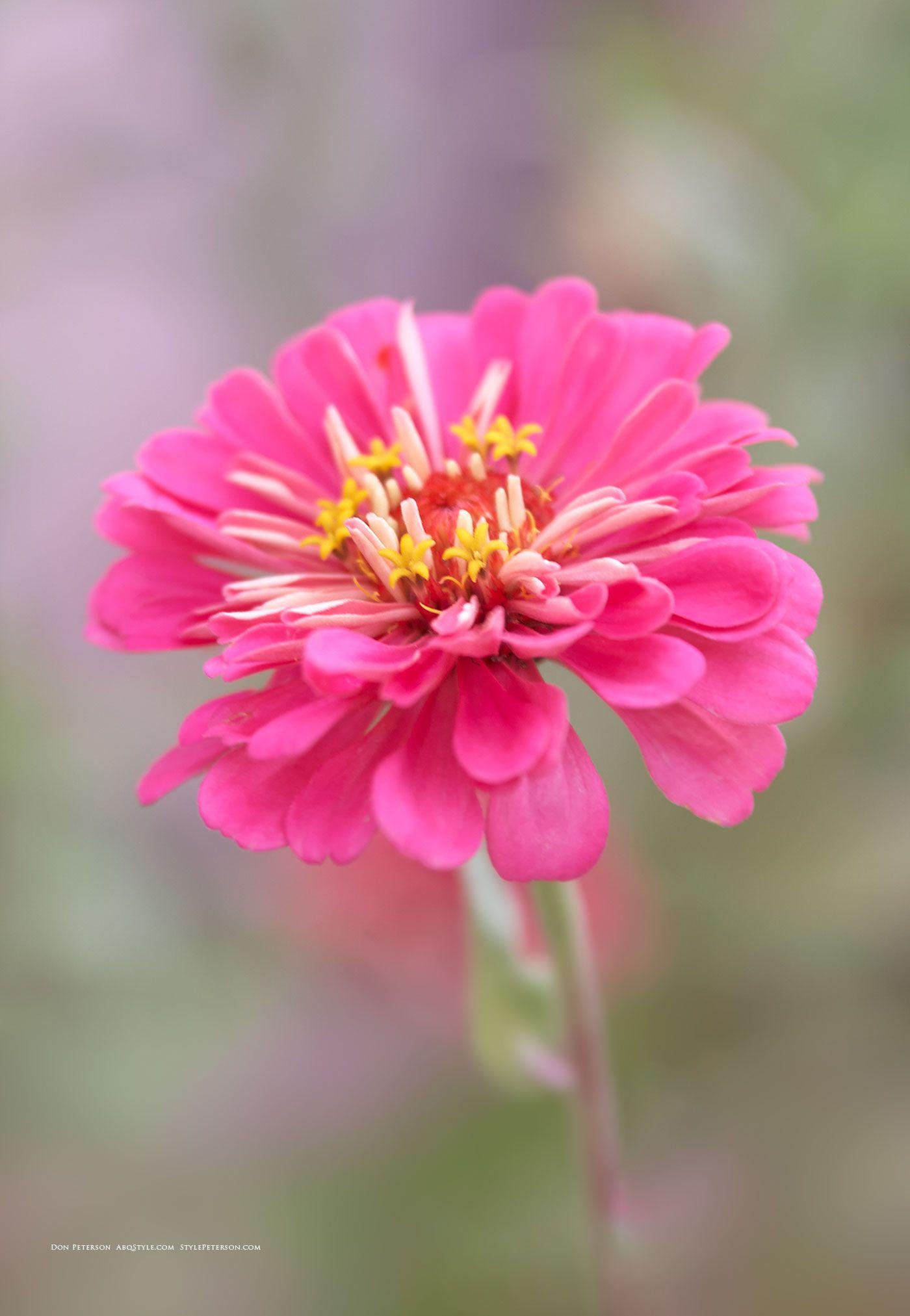 Abq Biopark Botanic Garden Albuquerque Nm Pink Flower