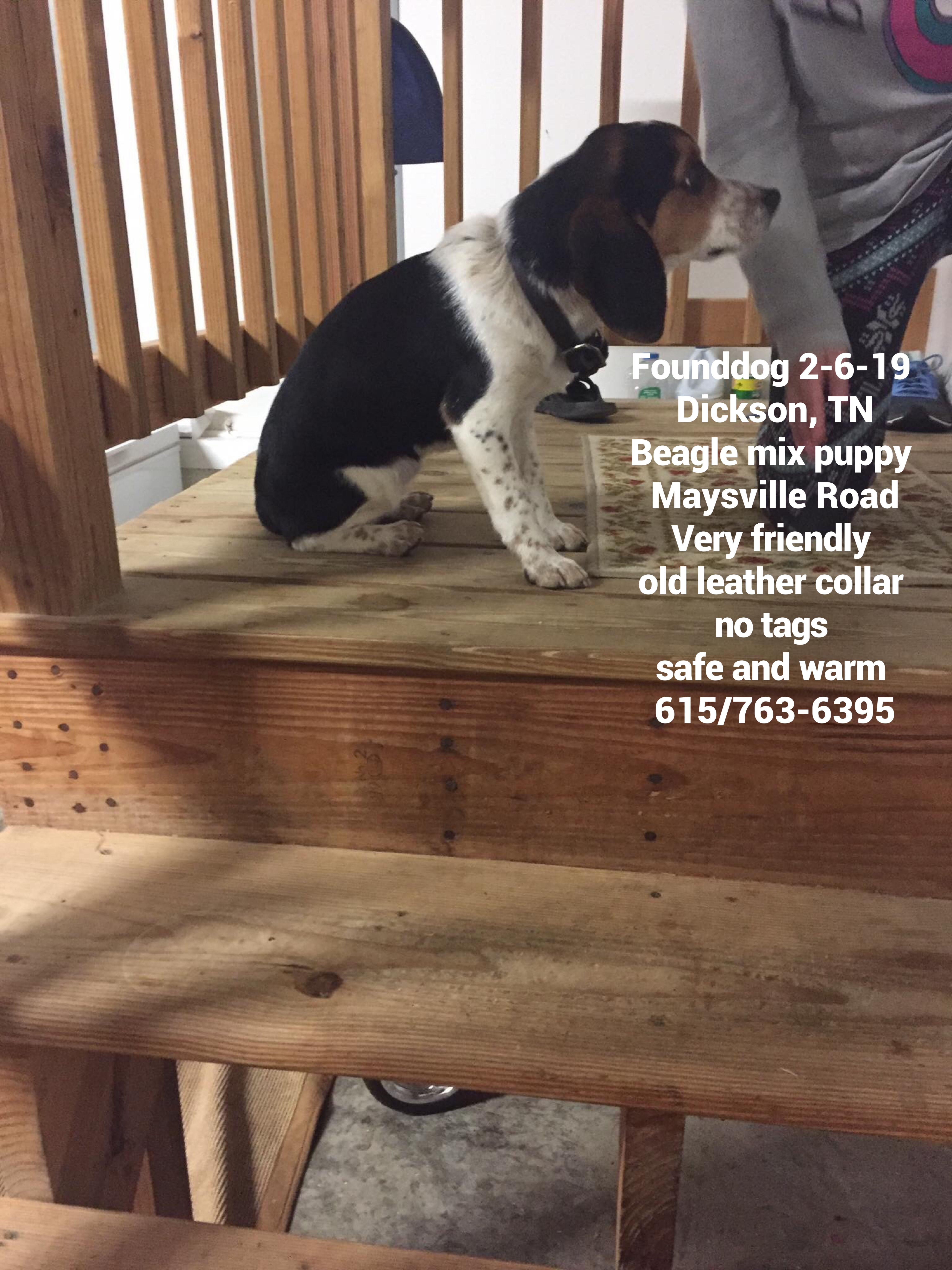 Founddog 2 6 19 Dickson Tn Beagle Mix Puppy Maysville Road Very