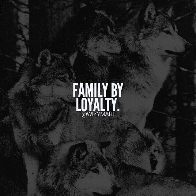 Wolves Quotes - Google Search