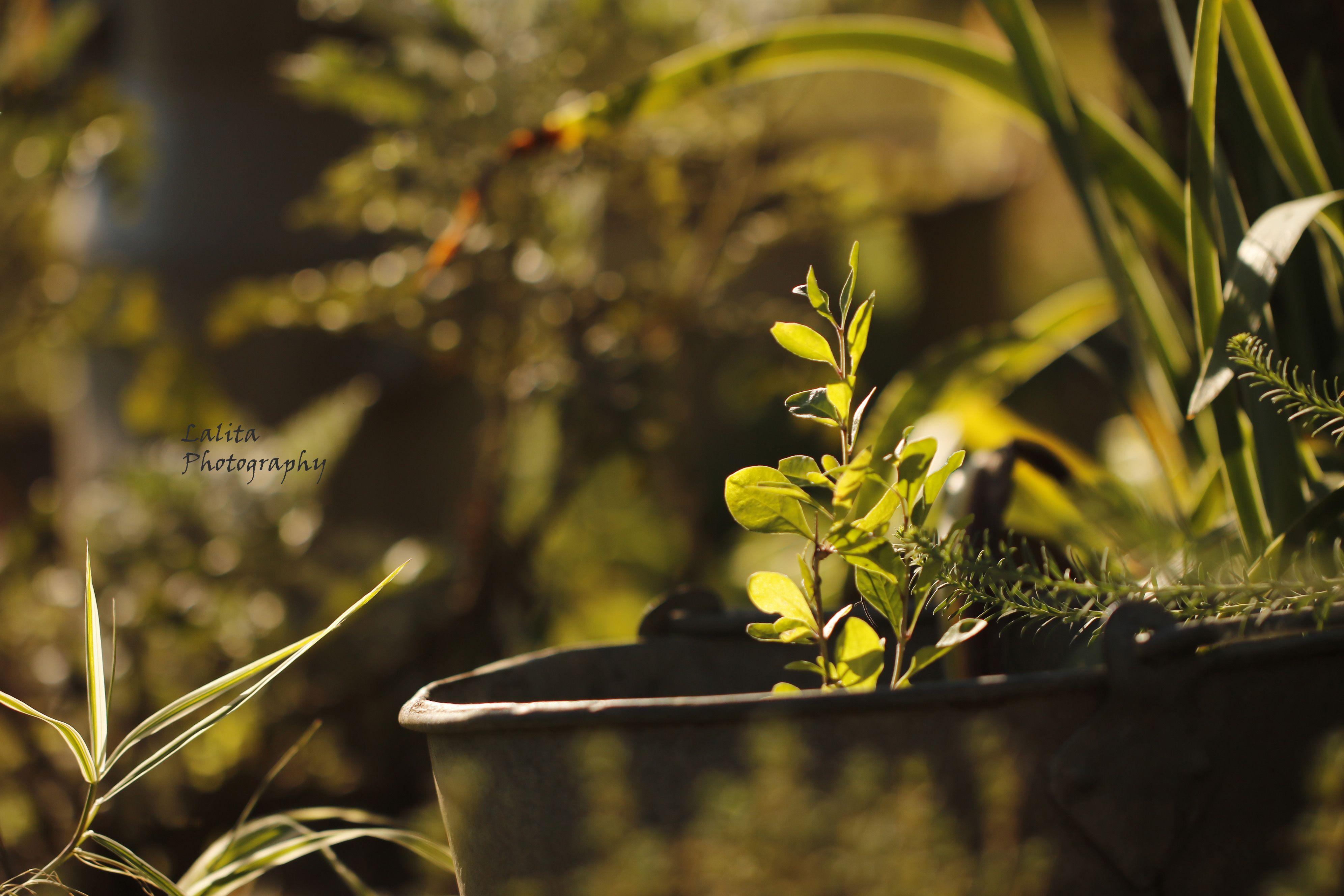 Un jardin doux, un jardin vert, un jardin que l\'on apprécie ...