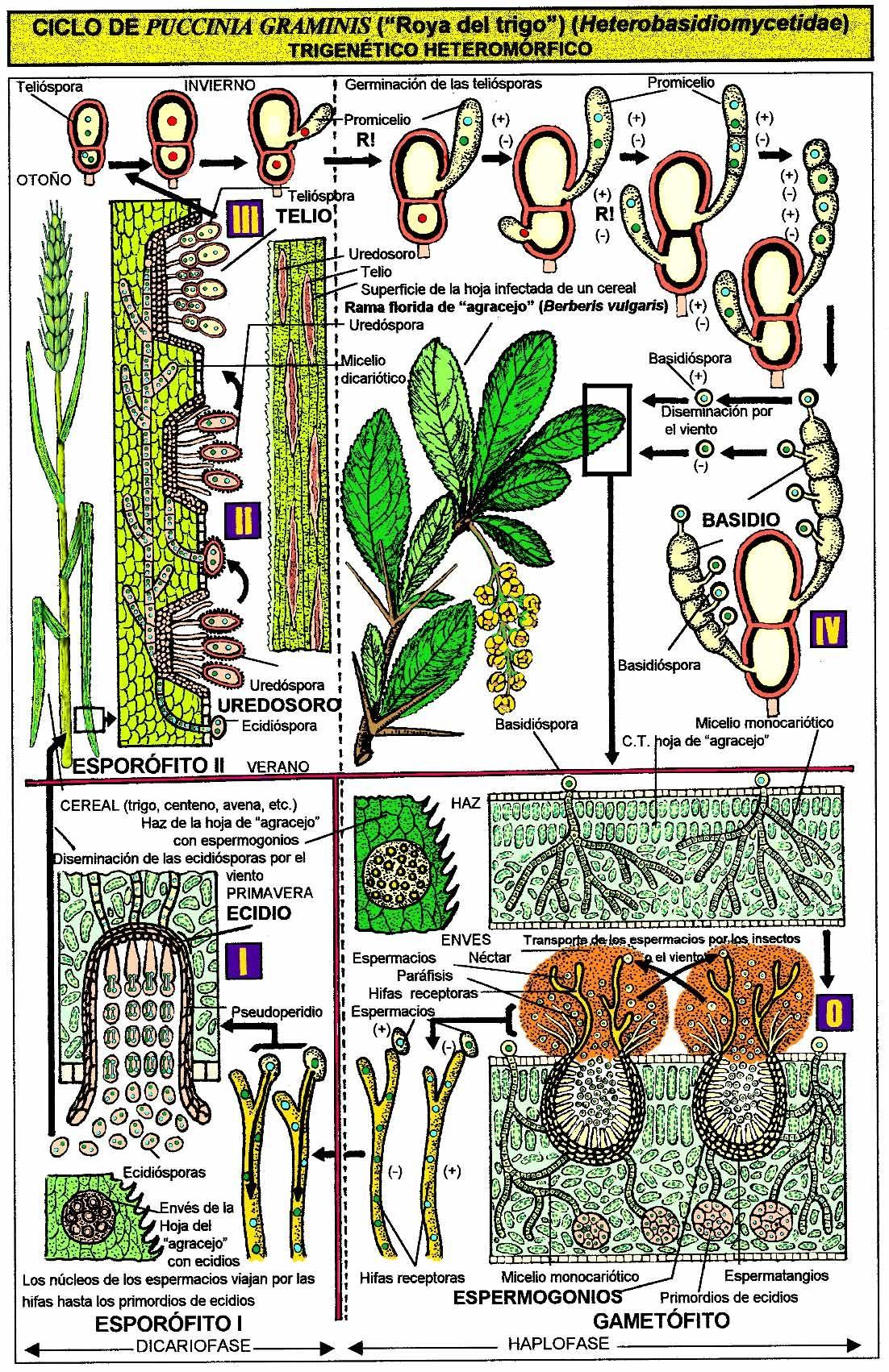96 Ideas De Fungi Hongos Setas Comestibles Setas