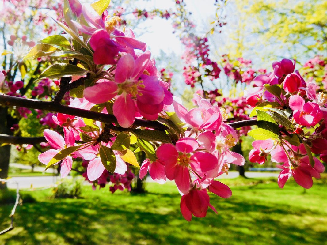"""Apple Blossom Time"" WylddaneProductionsLLC Ericksson"