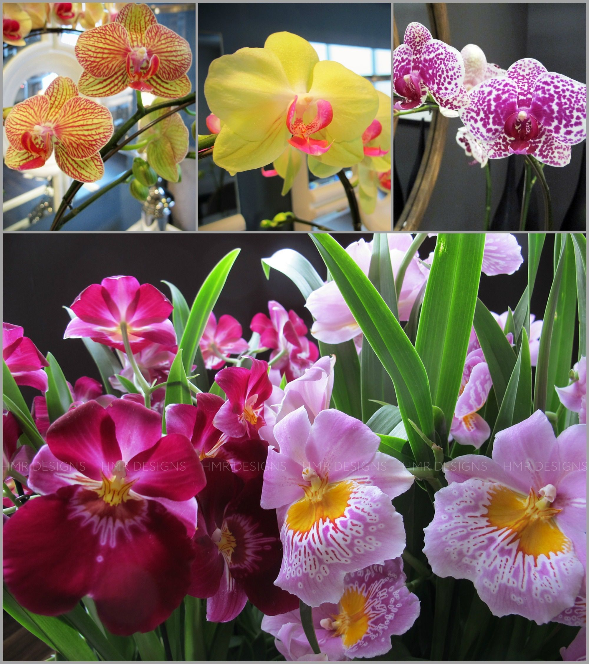 Thinking Outside of the HeartShaped Box Orchids Pinterest