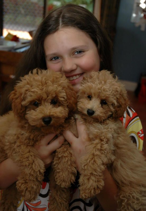 Schnoodle Valley View Dog Breeders Customer Testimonials Schnoodle Dog Cute Dog Mixes Dog Breeder