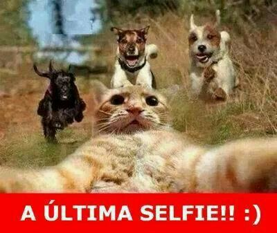 Selfie Gatito Perros Huida Ultima Humor Divertido Sobre Animales Gatitos Divertidos Meme Gato