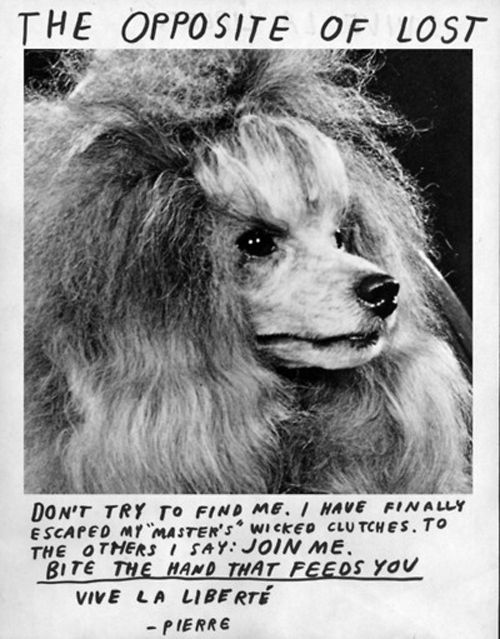 The Poodle Revolution Animals Losing A Pet Pet Signs