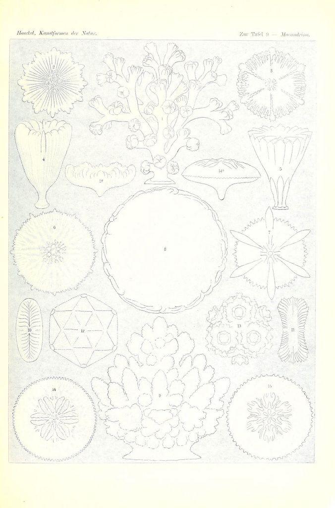Kunstformen der Natur Leipzig und Wien :Verlag des Bibliographischen Instituts,1904. biodiversitylibrary.org/page/33543246