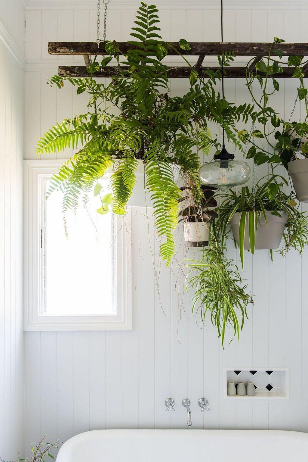 inspiring hanging plants ideas for bathroom in bathroom