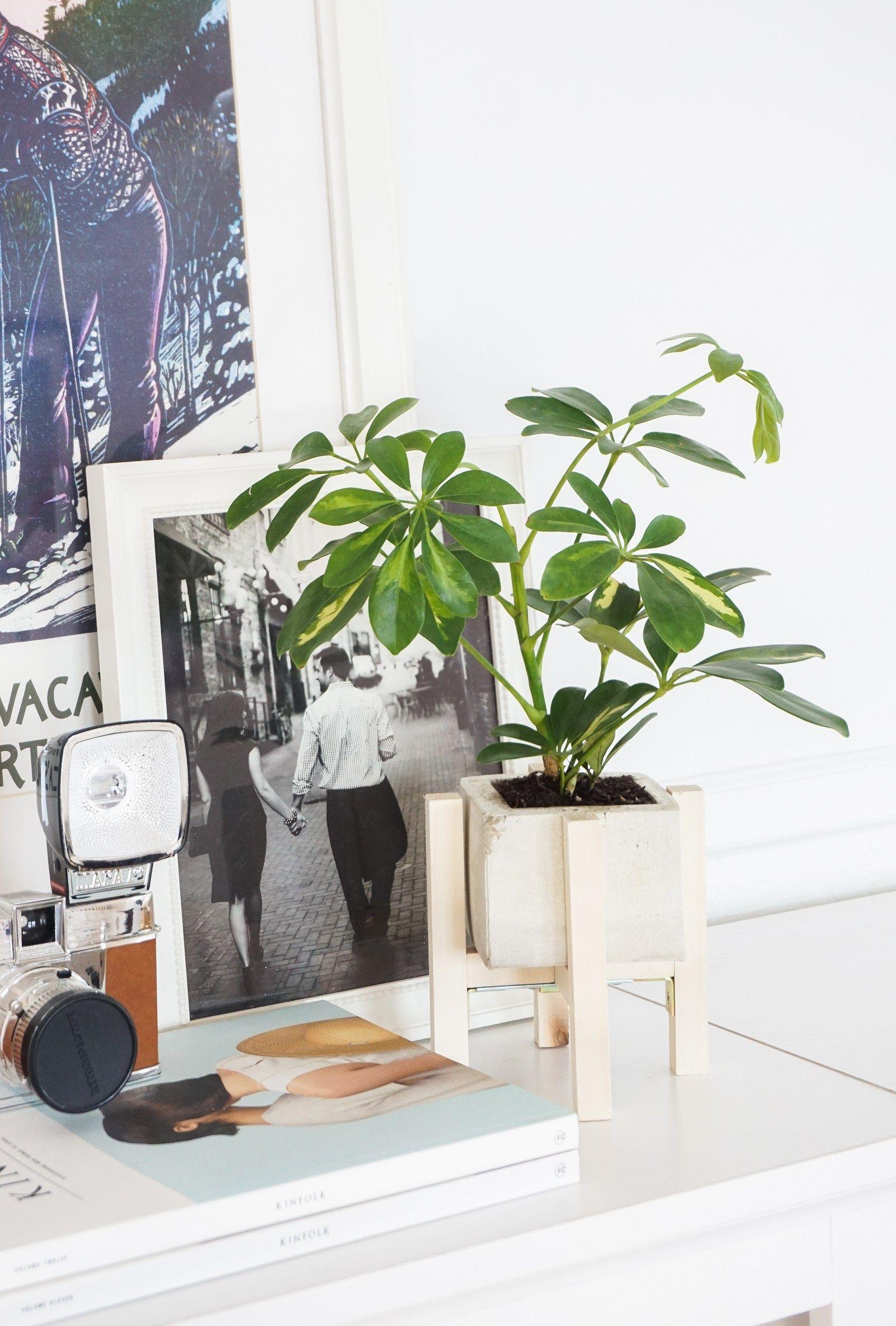 Concrete Planter + Wood Stand DIY | Francois et Moi