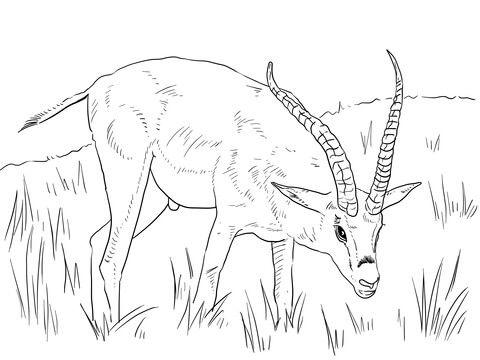 Gacela de Grant Dibujo para colorear | animales | Pinterest