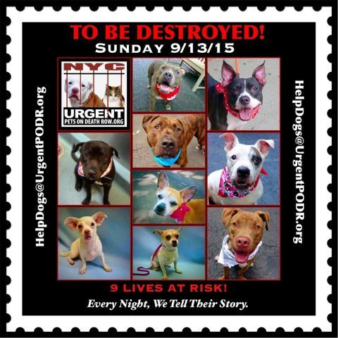 9 BEAUTIFUL LIVES TO BE DESTROYED 09/13/15 - - Click for info & Current Status: http:// Please share their story and be their voice. This is a VERY HIGH KILL facility, so time is critical. YOU may be their ONLY HOPE! /to-be-destroyed-4915/