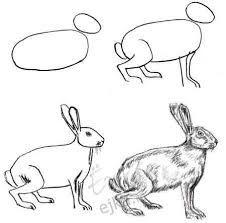 Dibujo De Una Liebre Paso A Paso Dibujo De Animales Dibujos Dibujos De Liebres