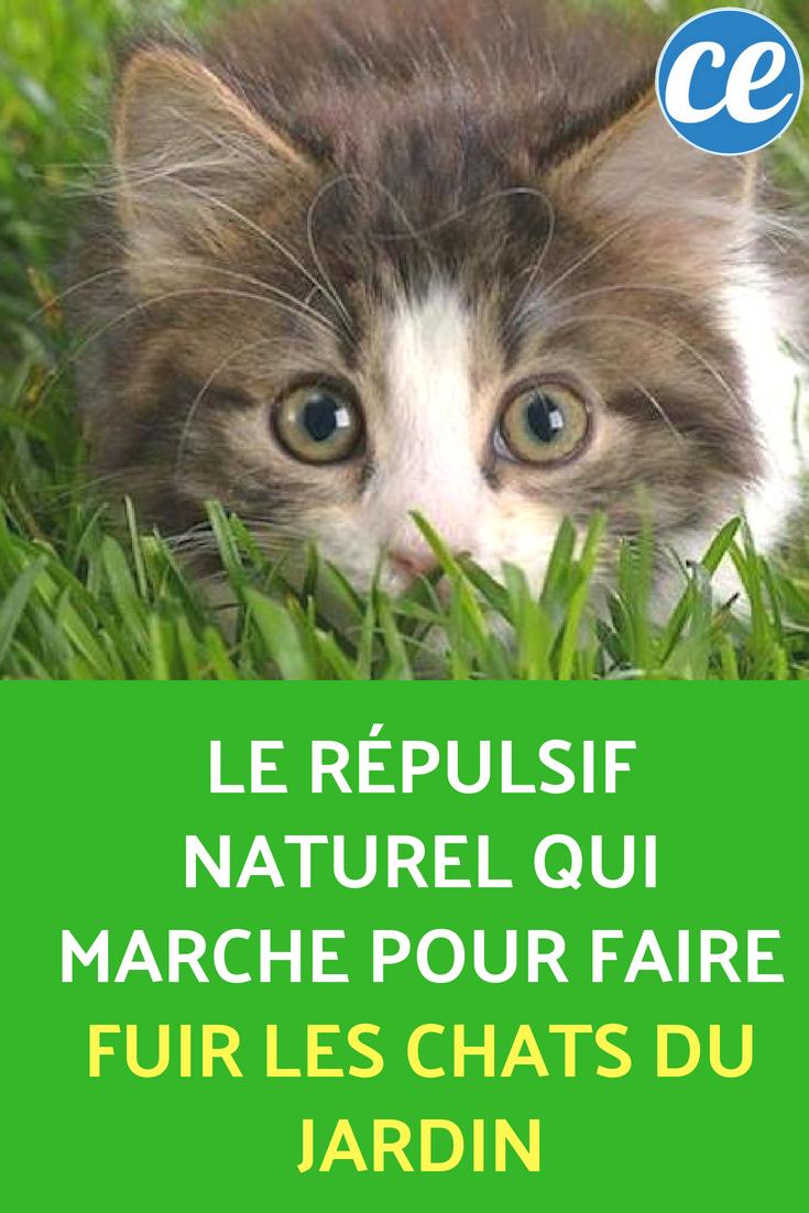Le r pulsif naturel qui marche pour faire fuir les chats du jardin plantes et jardinage - Repulsif chat jardin naturel ...