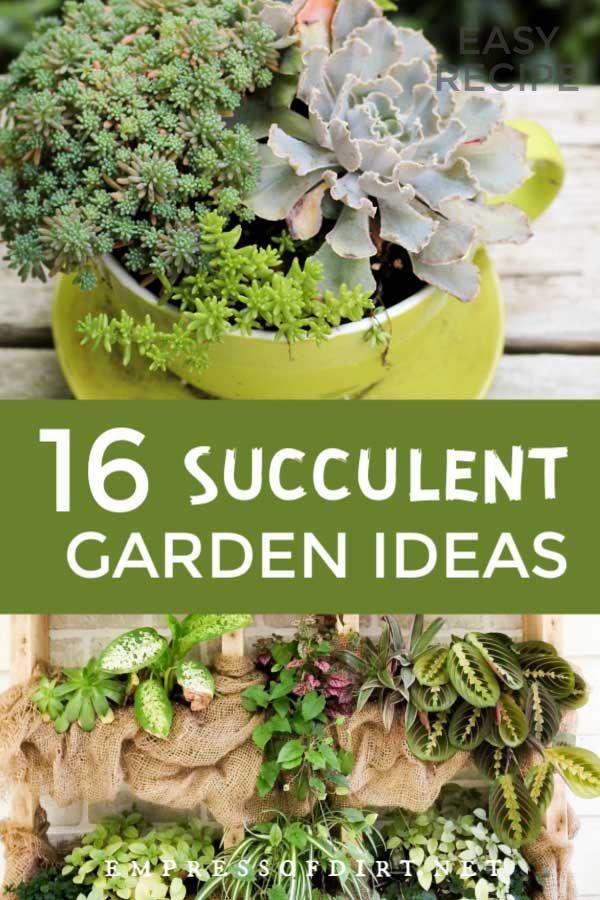 16 Creative Succulent Garden Ideas  Empress of Dirtcreative