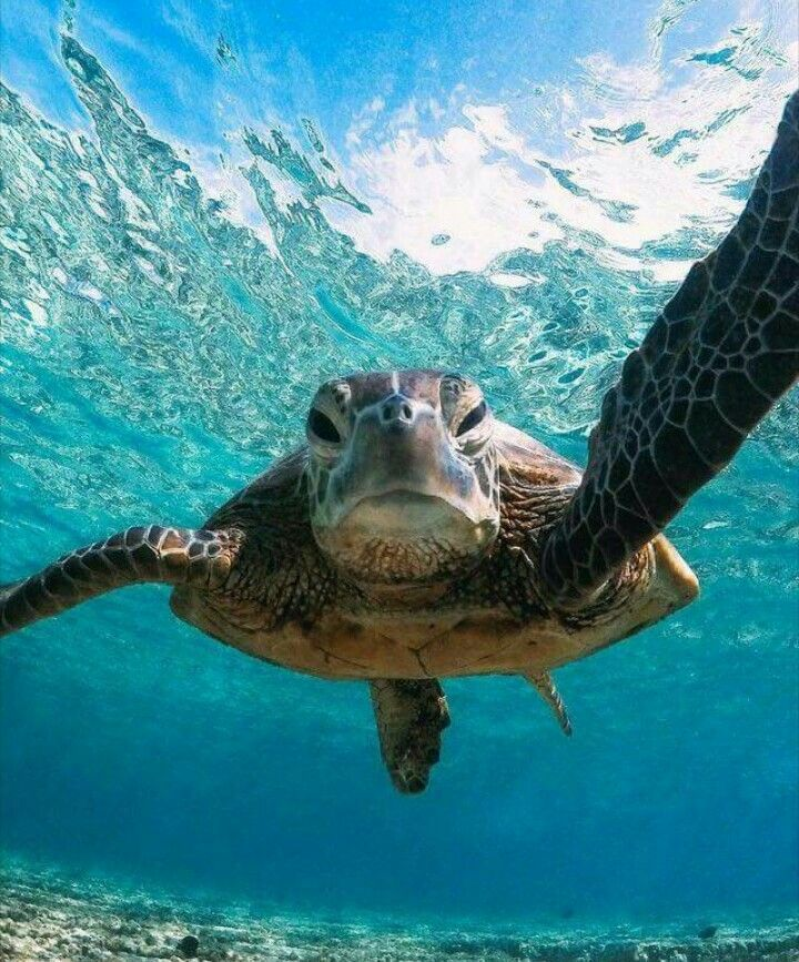 Live Wallpaper Free Download For Mobile Green turtle
