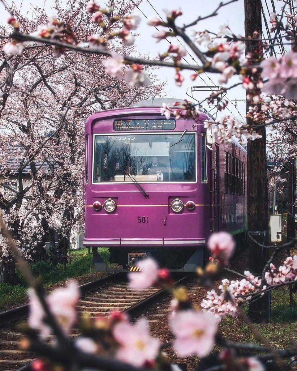Nature Art On Twitter Aesthetic Japan Japan Cherry Blossom Season Japan