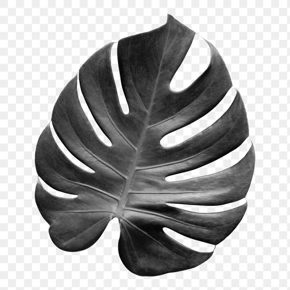 Download Premium Png Of Gray Monstera Leaf Design Element 2362799