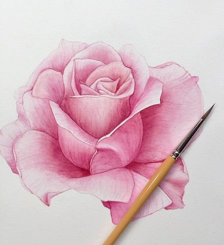 Pink Rose | Watercolor painting of a pink rose | Andiriana | Flickr