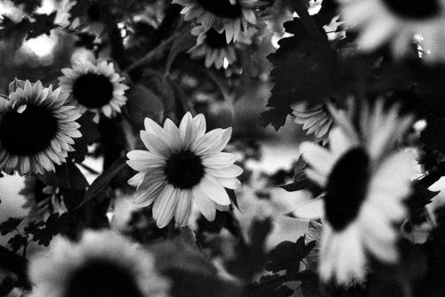 Black And White Tumblr Backgrounds