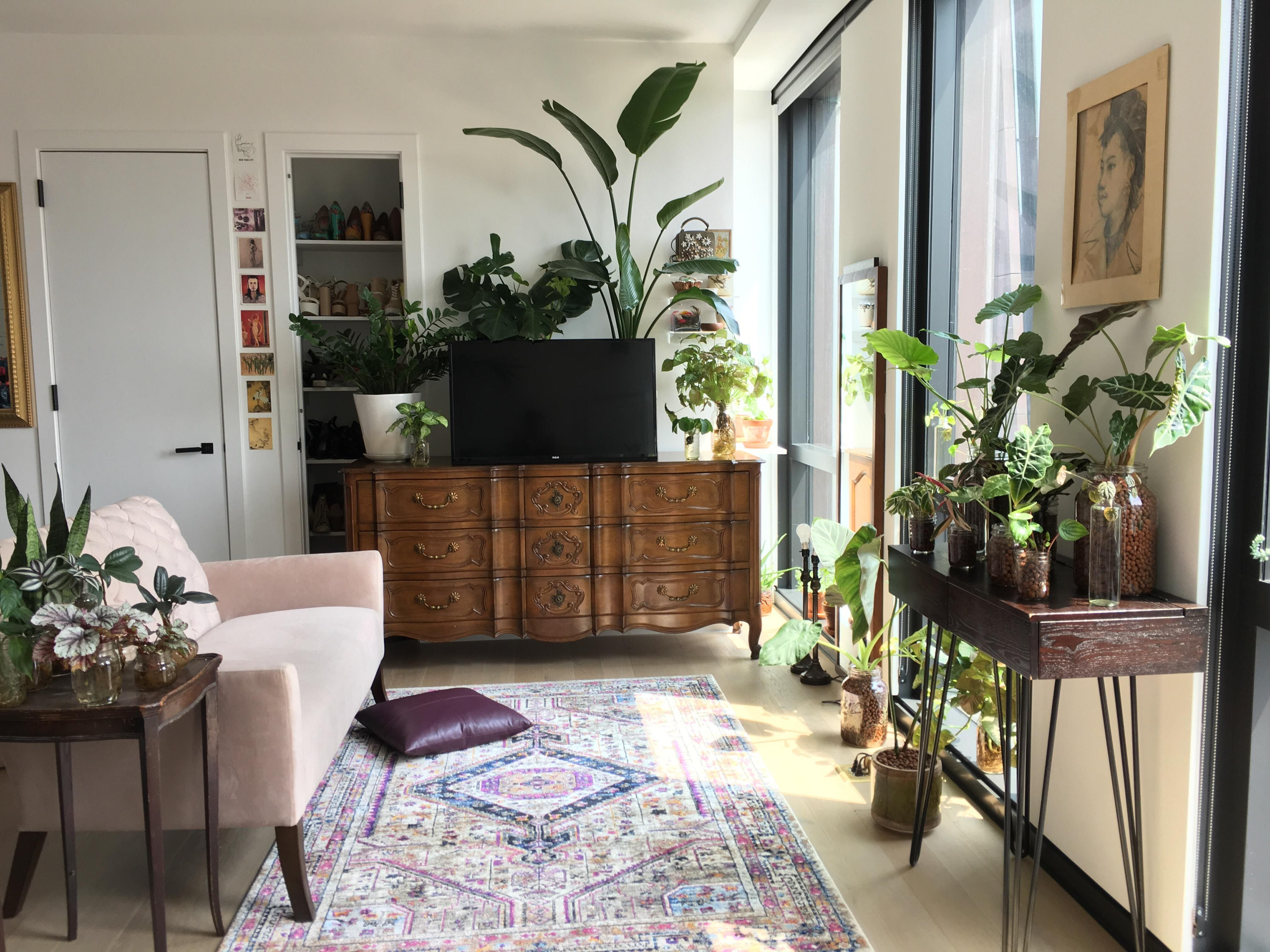 Finally Cleaned My Apartment And Added New Plants Houseplants Living Room Without Tv Living Room Setup Living Room Plants