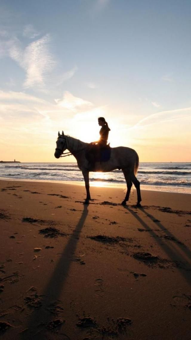 Sunset Beach Horse Girl Shadow Landscape Animal Cheval Photographie Plage