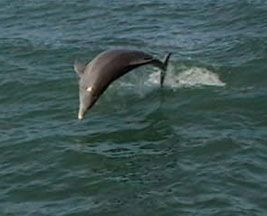 Florida Tampa Bay Charter Boat Trip, Egmont Key Beach Weddings, cruise, egmont key tours, dolphin tale and your own dolphin tale