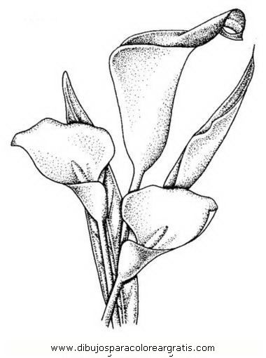 Molde Calas Cuadro Dibujos Flores Dibujadas A Lapiz Arte Vectorial