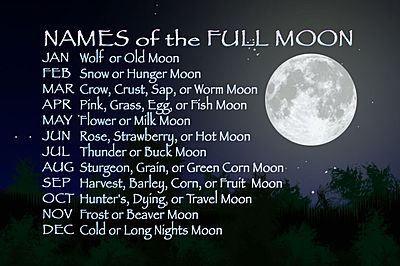 Deers Are Messenger Of Artemis Diana Goddess Of The Moon Animal Totem Spirit Guides Spirit Animal Meaning Spirit Animal Totem